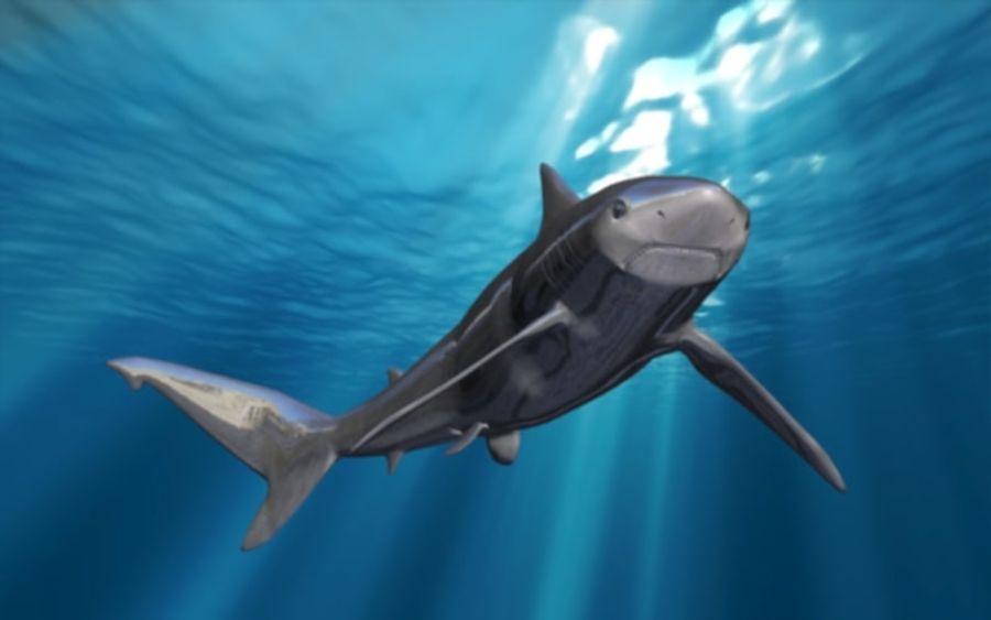 squalo truccato animato royalty-free 3d model - Preview no. 4