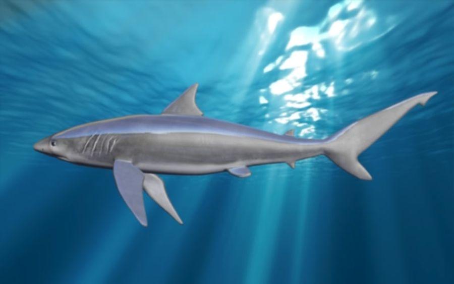 squalo truccato animato royalty-free 3d model - Preview no. 13