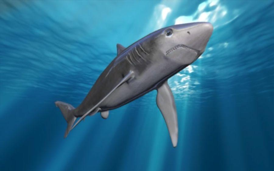 squalo truccato animato royalty-free 3d model - Preview no. 7