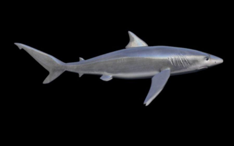 squalo truccato animato royalty-free 3d model - Preview no. 6