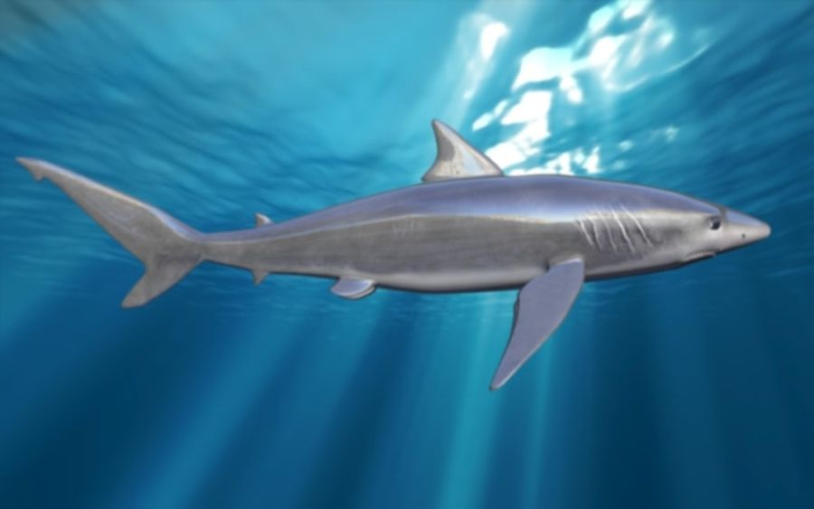 squalo truccato animato royalty-free 3d model - Preview no. 14
