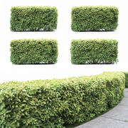 Spiraea Japonica Hedge 3d model