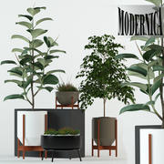 Plants collection 78 Modernica pots 3d model