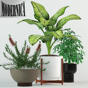 Plants collection 79 Modernica pots 3d model