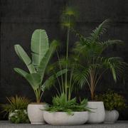 Colección de plantas 80 modelo 3d