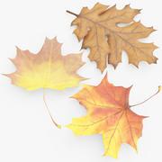 Folhas de Autum 3d model