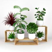 Collection de plantes 3d model