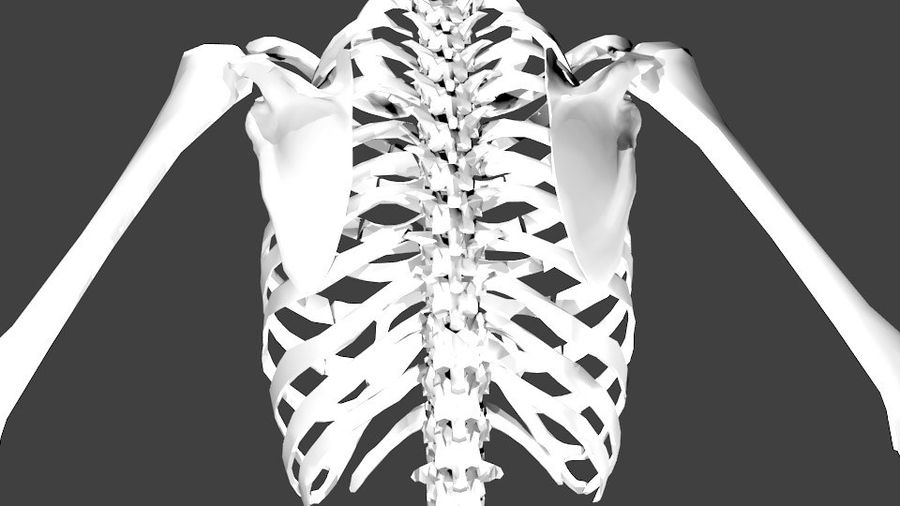 Szkielet człowieka royalty-free 3d model - Preview no. 8
