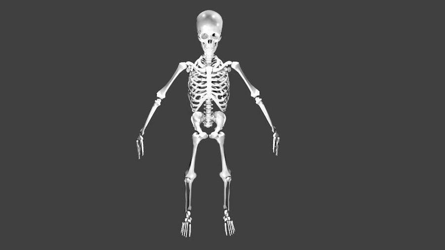 Szkielet człowieka royalty-free 3d model - Preview no. 1