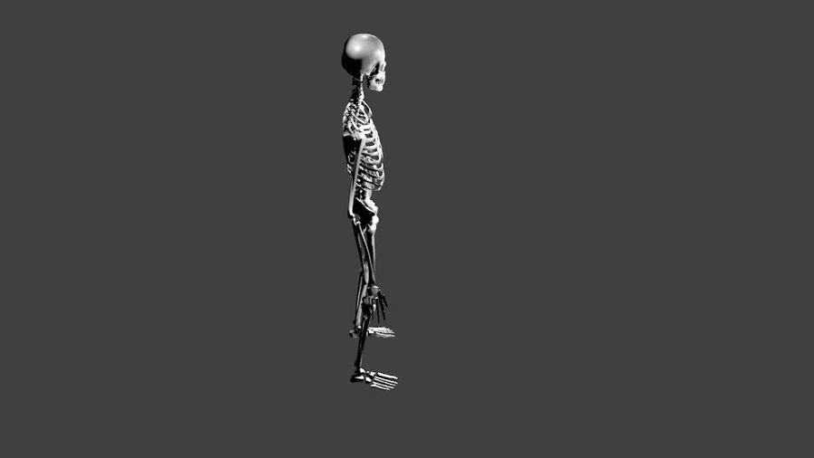 Szkielet człowieka royalty-free 3d model - Preview no. 4