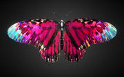Batterfly Pink Low Polygon Art Insect VR / 3d model