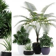 Plantencollectie 86 3d model