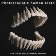 逼真的人类牙齿 3d model