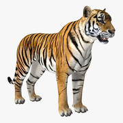 Tigre 3d model