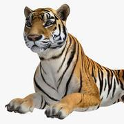 タイガー 3d model