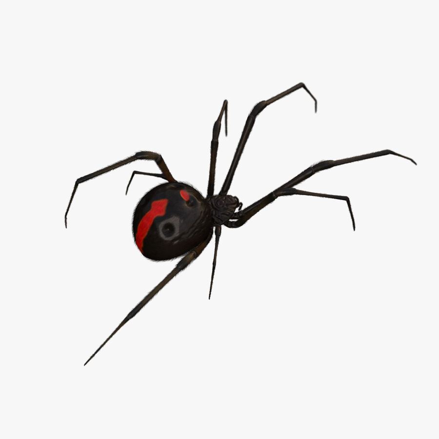 Black Widow Rigged royalty-free 3d model - Preview no. 1
