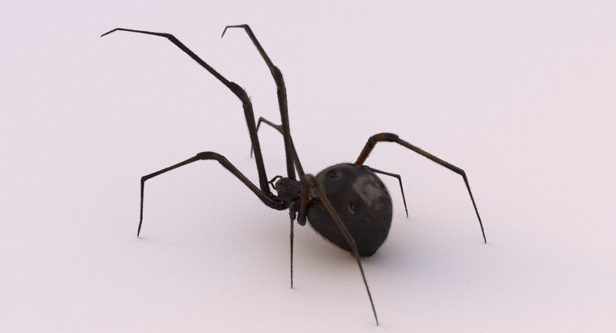 Black Widow Rigged royalty-free 3d model - Preview no. 14
