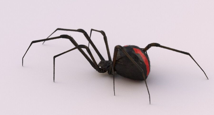 Black Widow Rigged royalty-free 3d model - Preview no. 7