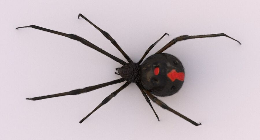 Black Widow Rigged royalty-free 3d model - Preview no. 6