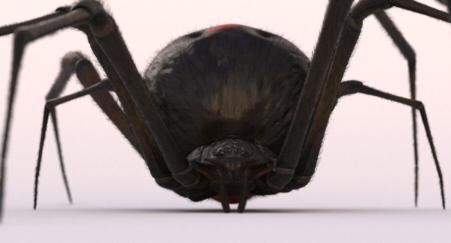 Black Widow Rigged royalty-free 3d model - Preview no. 4