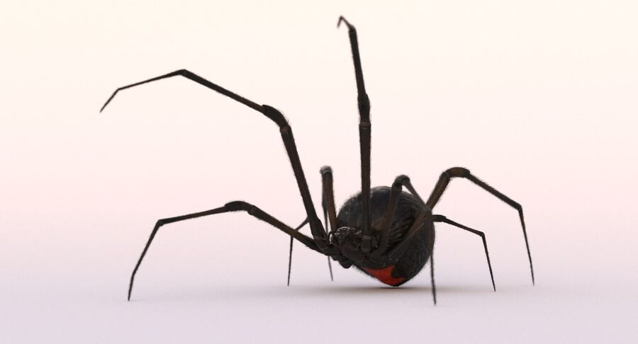 Black Widow Rigged royalty-free 3d model - Preview no. 8