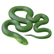Animated Green Mamba 3d model