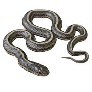 Animated Garter Snake 3d model