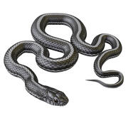 Animated Black White Snake 3d model