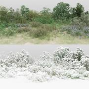 30 + 30野生の茂み 3d model