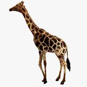 Esemplare del Museo delle giraffe (animato) 3d model