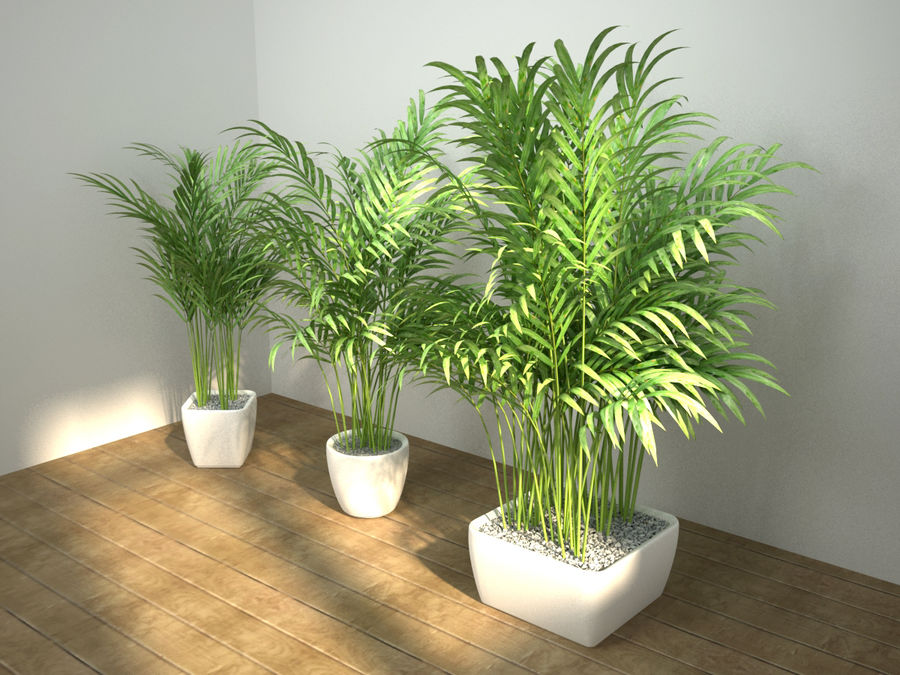 palm set royalty-free 3d model - Preview no. 2
