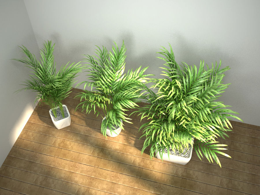 palm set royalty-free 3d model - Preview no. 5