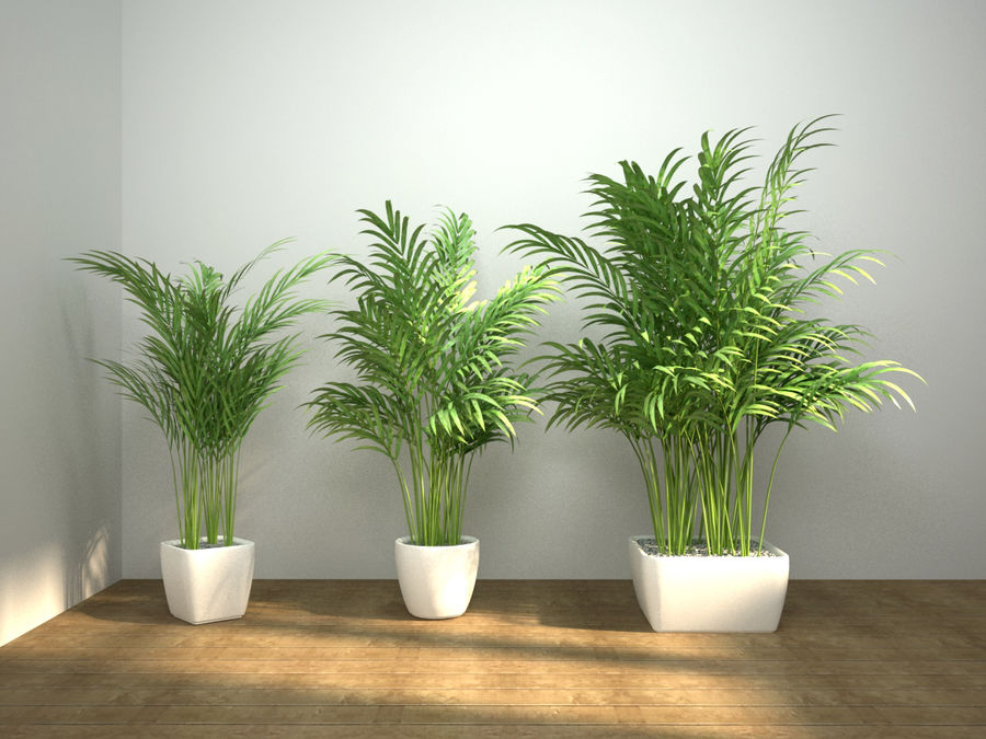 palm set royalty-free 3d model - Preview no. 3