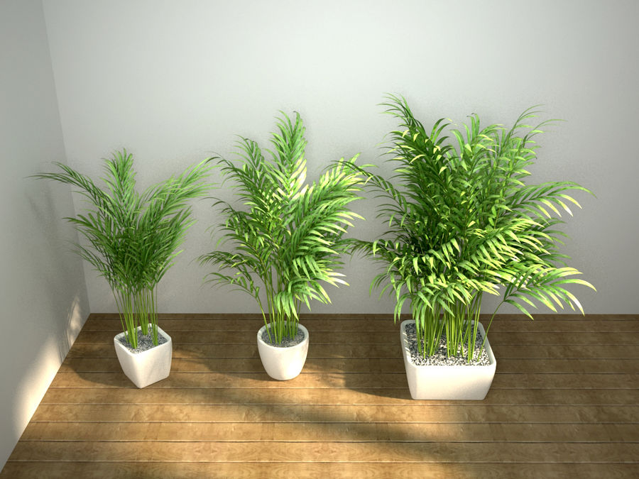 palm set royalty-free 3d model - Preview no. 1