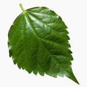 잎 3d model