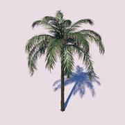 Queen Palm Tree 3d model