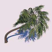 Curvy Palm Tree 3d model