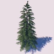 Yellow Cypress Tree 3d model