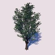 Öz odun ağacı 3d model
