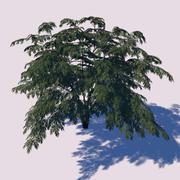 Aralia Tree 3d model
