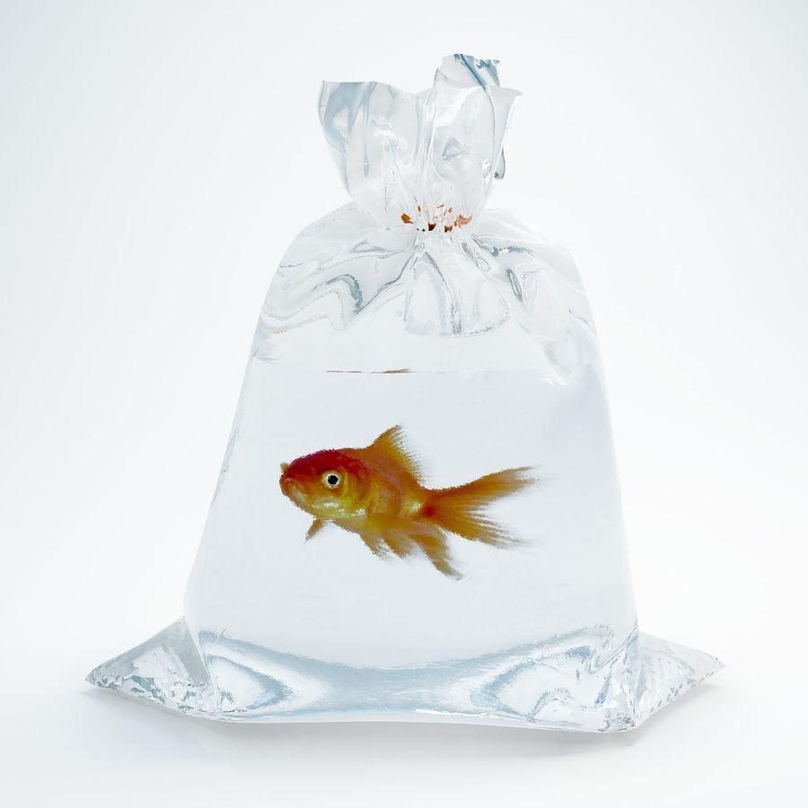 золотая рыбка royalty-free 3d model - Preview no. 3