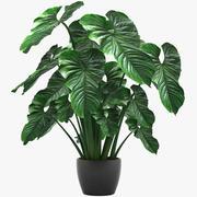 Folhas tropicais 002 3d model