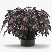 Folhas tropicais 003 3d model