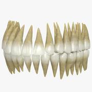 牙齿 3d model
