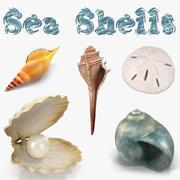 Colección de modelos 3D de conchas marinas 2 modelo 3d