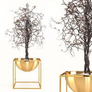 건조한 식물 3d model