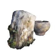 Stubbe potten 3d model