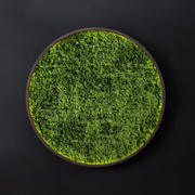 Mosswall disk 3d model