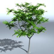 Tree 05 3d model