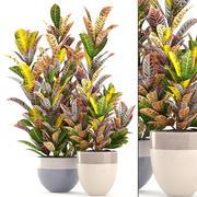 巴豆植物 3d model